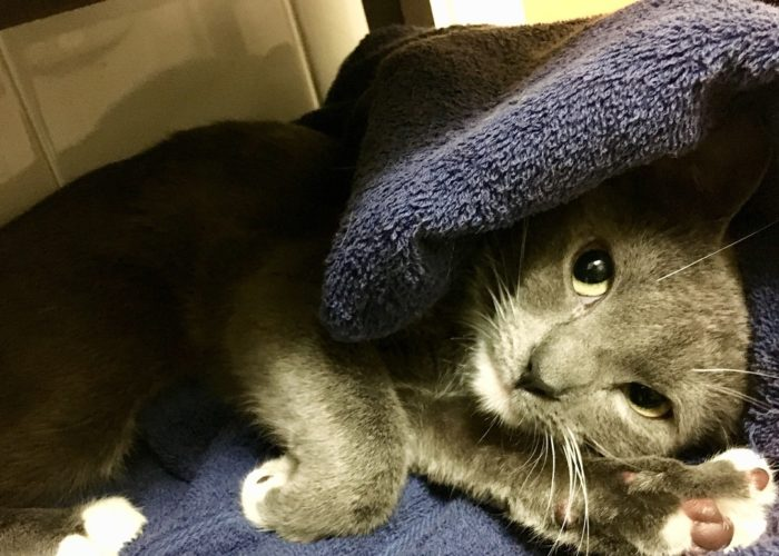 Who doesn't love a warm towel? #catstagram #cats_of_instagram #kitten #catlove #instacat #cutecat…